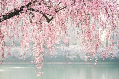Viaggio di nozze alla scoperta del Giappone